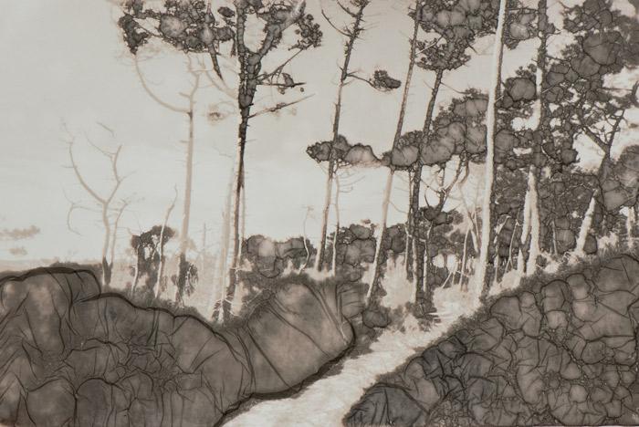 Le sentier de pins